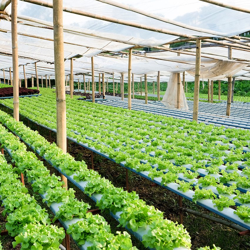 New Hedging Strategy Saved Local BC Company Half a Million Dollars